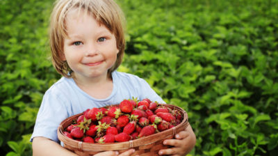 Why Get Your Kids To Eat Organic?
